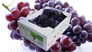 画像1: 山形本沢産の高級葡萄 キングデラ (キングデラウェア) (ハウス栽培・特選贈答用)