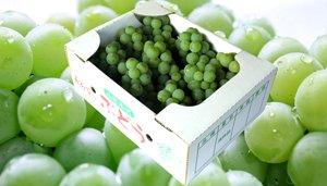 画像1: 山形本沢産の高級葡萄 ナイアガラ (ハウス栽培・特選贈答用)
