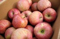 ふじりんご  ちょっと訳ありアウトレット ご家庭用10kg (多少キズあり)