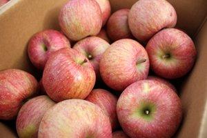 画像1: ふじりんご  ちょっと訳ありアウトレット ご家庭用10kg (多少キズあり)